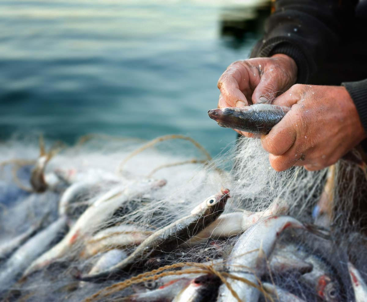 traceable and sustainable seafood