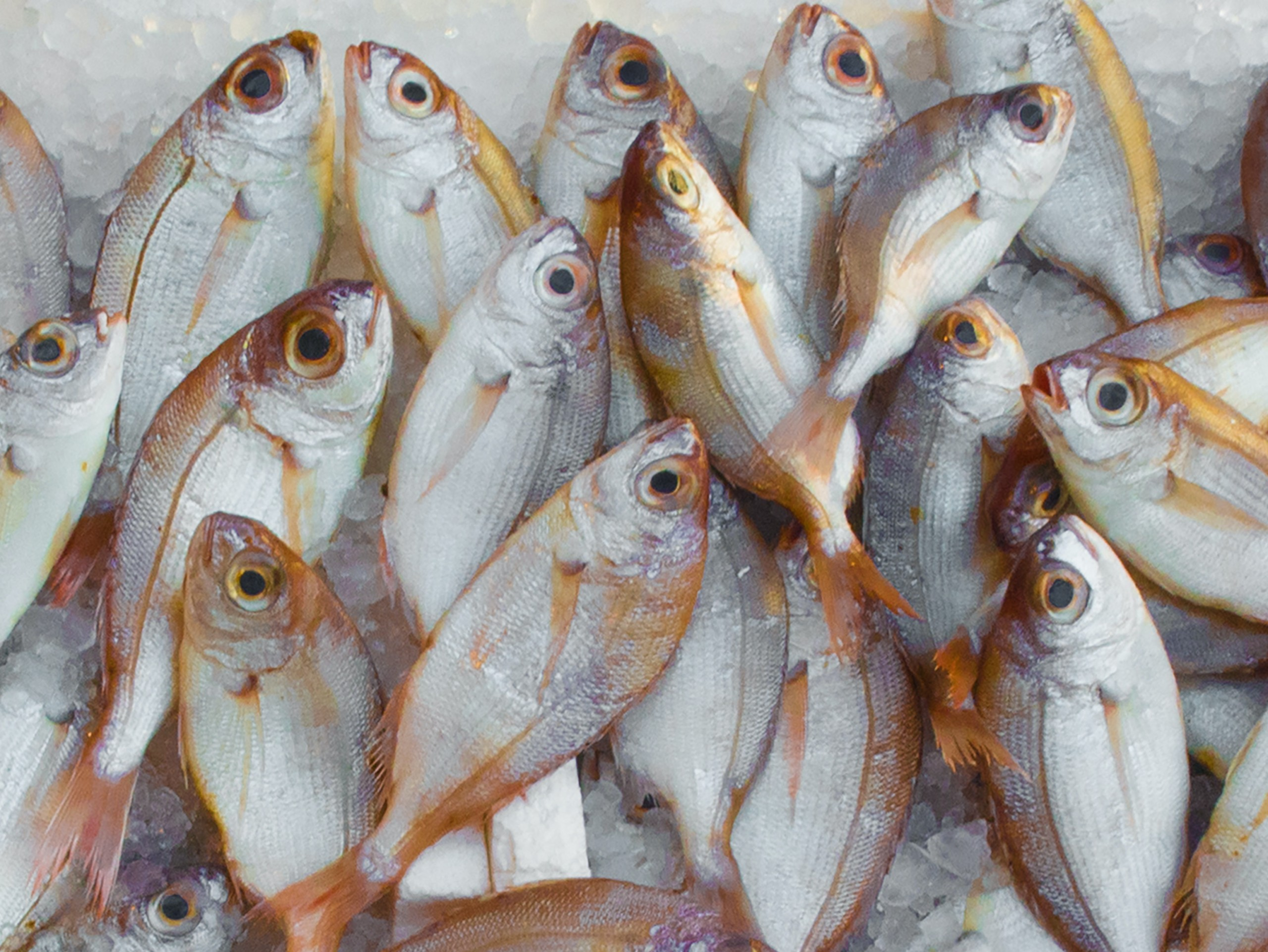 Seafood traceability software